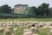 Hartz IV: Wieviele oder <br/>richtiger wie <b>wenige</b> <br/>schwarze Schafe .. ?